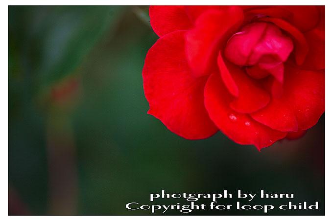 201007_MG_0016.jpg